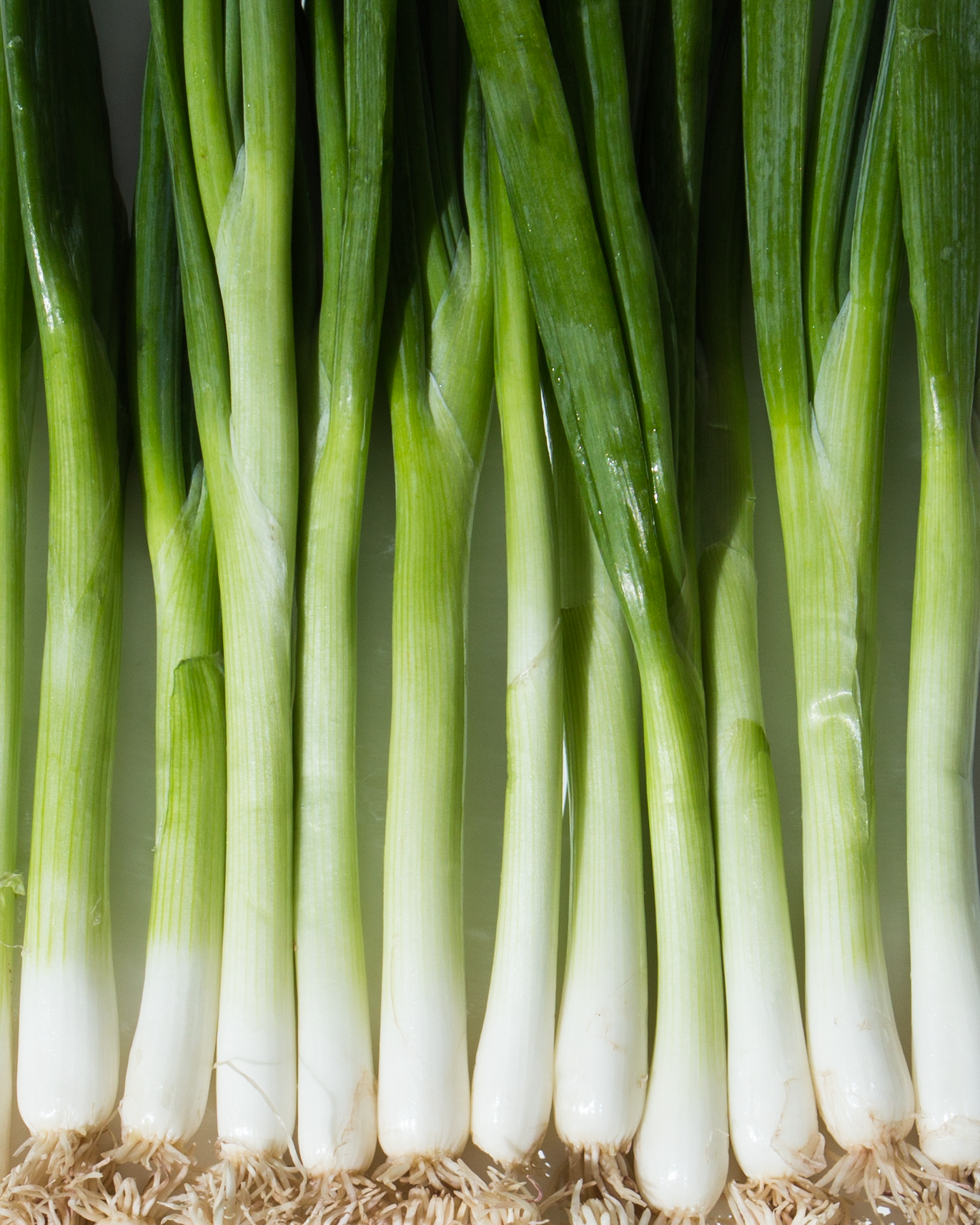 Roasted Scallion + Chive Dip // Wit & Vinegar